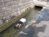 Swiming080707