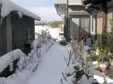 Snowday110117