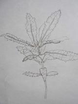 Sketchline