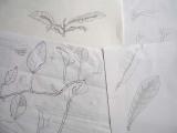Sketchpractice
