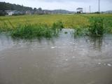 Typhoon12shingawa