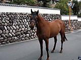 Horsepause