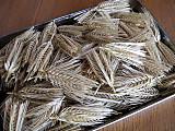 Barleyear