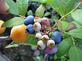 Bbrancocascolor