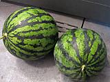 Watermelon7th