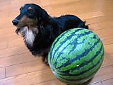 Watermelonreggie9kg