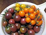 Tomatocropoct2014