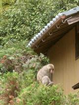 Monkeyfamily