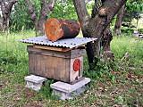 Pollinationboxeast
