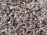 Barleyseedbefore