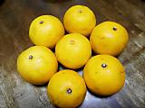 Citrus7