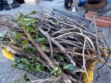 Firewoodtody